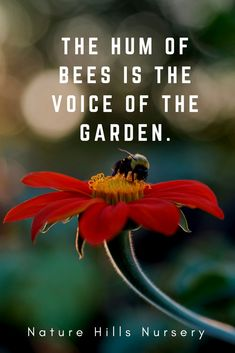 """""""The hum of bees is the voice of the garden."""""""