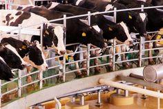 Los 5 problemas que amenazan a los lecheros locales