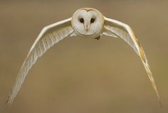 22 Bird Photographs You Have Never Seen Before | Nicenfunny