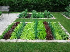 Backyard Vegetable Gardens, Vegetable Garden Design, Terrace Garden, Fruit Garden, Garden Beds, Garden Landscaping, Planting Vegetables, Garden Care, Colorful Garden