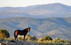 The Story of Tom Davis, the BLM, and 1,700 American Wild Horses Who Disappeared