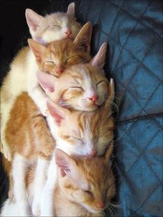 I want to be snuggled up with these guys