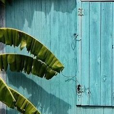❤️ #tropical #perfection #turquoise  #walls  #lovethem #palmtrees #islandlife #oceanside #oceanlover #bali #lovely #bliss #wanderlust #gypsy #freedom #freespirit