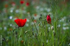 prairie fleurie - Recherche Google