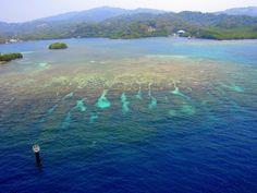 Coral reefs near Roatan island in Honduras