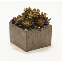 Distinctive Designs Faux Hen and Chick Succulents in Square Planter | Wayfair
