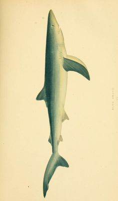v. 1 - A history of the fishes of the British Islands. - Biodiversity Heritage Library
