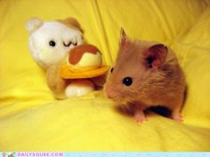 I love hamsters, and this is just too cute.