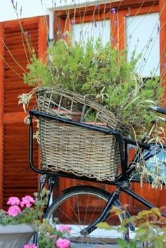 Vintage bicycle with wicker basket filled with lavender (1) From: 123 Royalty Free, please visit