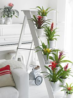 gekleurde planten