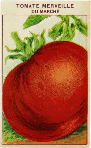French seed label, tomato seed pack, vintage garden clip art, old fashioned seed package, vintage tomato illustration