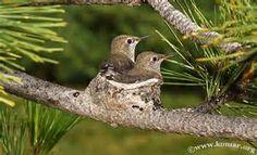 Hummingbird Nest - Bing Images