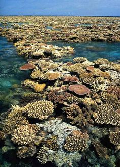 The Great Barrier Reef at Low Tide