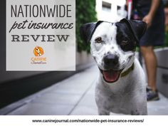 True nose-to-tail coverage with Nationwide Pet insurance