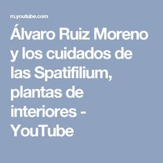 Álvaro Ruiz Moreno y los cuidados de las Spatifilium, plantas de interiores - YouTube