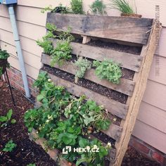 Would you like to have a nice touch in your small garden? Think about a pallet garden ideas. Would you like to have a nice touch in your small garden? Think about a pallet garden ideas. Vertical Vegetable Gardens, Home Vegetable Garden, Vegetables Garden, Herbs Garden, Big Garden, Fruit Garden, Garden Path, Shade Garden, Herb Garden Pallet