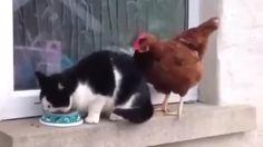 Jerk Chicken                                                                                                                                                      G... http://webissimo.biz/jerk-chicken/ Check more at http://webissimo.biz/jerk-chicken/
