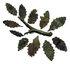 Leaves of oak.Sanctuary of Zeus at Dodona.ca. 300 BC Bronze imitations of oak leaves allowed the identification of the sacred tree at the oracle.According to Odyssey,prophecies were initially given through the whispering of the leaves of the sacred tree.The rustling of its leaves gave rise to the idea that the tree itself was talking.