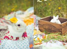 tea party with bunny