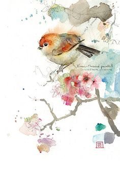 Parrotbill - Love the background mix of soft colours, makes you focus on bird.