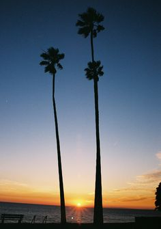 Laguna Beach Sunset & Palm Trees