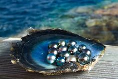 pearl farm tahiti shell with black pearls