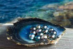 Kamoka Pearl grows Tahitian pearls in French Polynesia