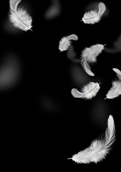 Iphone Background Images, Light Background Images, Editing Background, Black Backgrounds, Abstract Backgrounds, Wings Wallpaper, Wallpaper Space, Dark Wallpaper, Beautiful Flowers Wallpapers