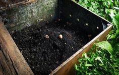 jardín de compost