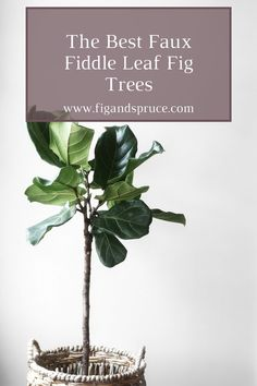 Ever considered using a faux fiddle leaf fig tree? We're covering why you may want to and what the best options are! Black Planters, Large Planters, Large Woven Basket, House Plant Delivery, Fiddle Leaf Fig Tree, Fig Leaves, Plant Guide, Plant Nursery, Faux Plants