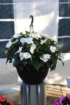 Die besten 25 flei iges lieschen ideen auf pinterest for Halbschattige balkonpflanzen