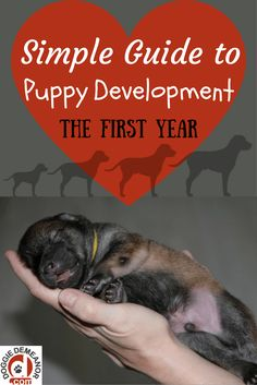 The Development of a Puppy