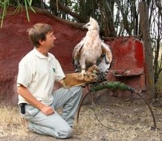 Crowned Solitary Eagles | Beauty of Birds  |African Crowned Eagle Falconry