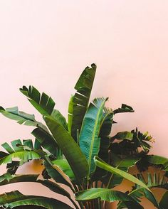 Green and pink. // papernstitchblog.com