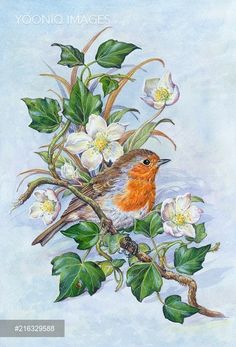 Yooniq images - Robin on ivy with Christmas roses in the snow Vintage Birds, Vintage Flowers, Fabric Painting, Painting & Drawing, Bird Coloring Pages, Sunflower Art, Bird Silhouette, Bird Pictures, Little Birds