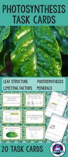 Set of 20 Task Cards on Photosynthesis. Perfect for revision! Questions on: * Leaf structure * Photosynthesis * Limiting factors * Minerals Includes: * 20 Task Cards * Answer sheet * Answer key Science Education, Life Science, Science Classroom, Physical Science, Earth Science, Classroom Ideas, Teaching Biology, Teaching Resources, Ap Biology