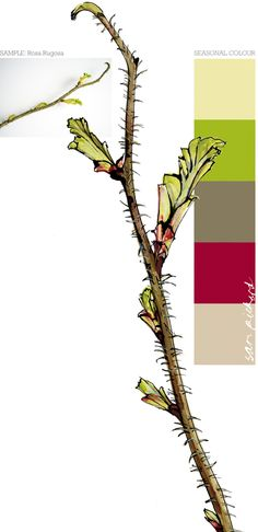 Planet Sam: Colours from the Season - Leaf Buds