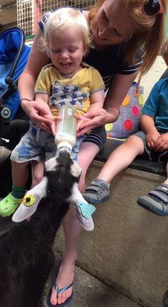 Bottle feeding goat kids at Farmer Palmer's Farm Park | Poole. Great family days out in Dorset | UK