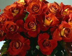 450 Best Flora Images Beautiful Flowers Planting Flowers