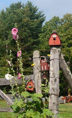 Bird houses I love the Hollyhock flowers! That was my Grandpa Potter's favorite flowers, Beautiful Birds, Beautiful Gardens, Casa Do Rock, Old Fences, Down On The Farm, Hollyhock, Farm Yard, Yard Art, Bird Feathers