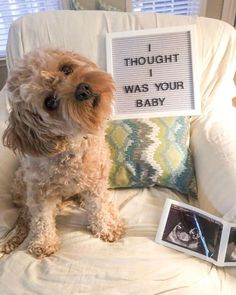 Baby Announcement Discover 21 Unique and Creative ways to Announce your Pregnancy! Out of the box Pregnancy announcement ideas. Sibling pregnancy announcements pregnancy announcement with dog letter board pregnancy announcement ideas Baby Surprise Announcement, Pregnancy Announcement To Parents, Cute Baby Announcements, Pregnancy Announcement To Husband, Pregnancy Announcement Photos, Baby Announcement With Dogs, Funny Pregnancy Pictures, Expecting Announcements, Pregnancy Reveal Photos