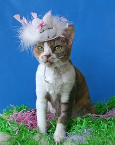 LOL! 10 Cats That Really Can't Deal With Easter Right Now :: Company.co.uk