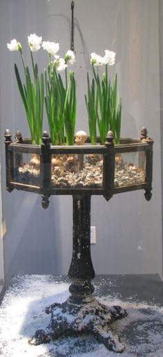 cast iron pedestal planter.....IMG_2600