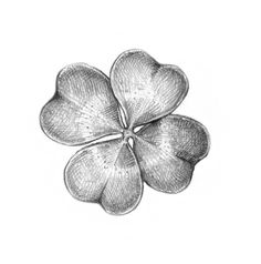Completing the drawing of the four-leaf clover Four Leaf Clover Drawing, Four Leaf Clover Tattoo, Clover Tattoos, Easy Drawings, Pencil Drawings, Beautiful Symbols, Notebook Art, Raven Tattoo, Four Leaves