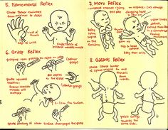Primitive Reflexes Part 2 of 3