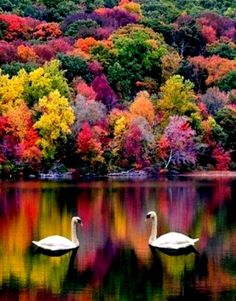 ♡ colors of fall