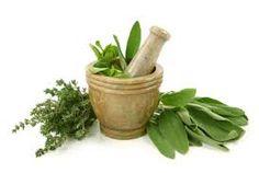 Resultado de imagem para ervas aromaticas