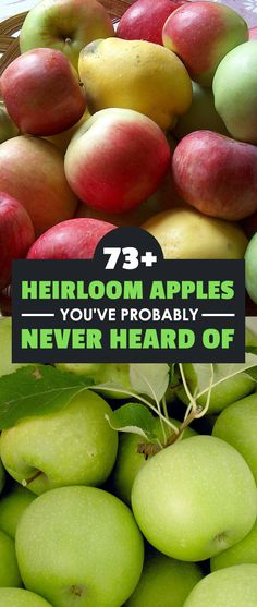 Forget about Granny Smith...there are dozens of heirloom apple varieties that you've probably never heard of! Check out the list and grow some of your own.
