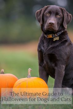 The Ultimate Guide to Halloween for Dogs and Cats, to keep your furry family safe this holiday season!