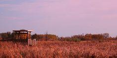 Top 5 Birding Trails in Wisconsin
